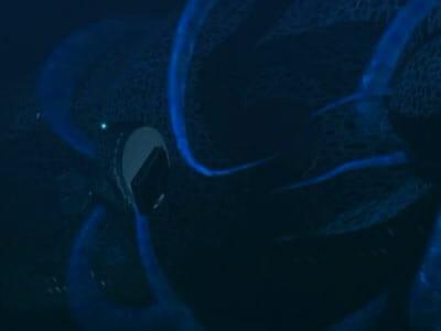 seaQuest squid