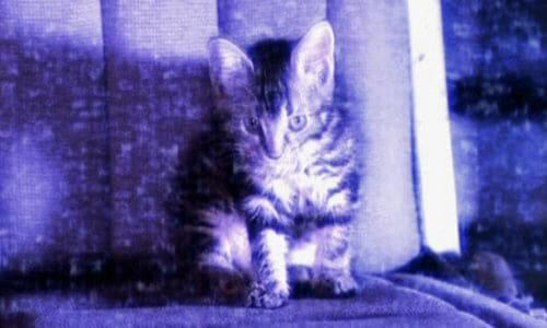 Cat on screen