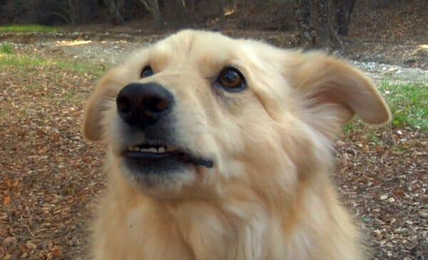 Marlowe the dog
